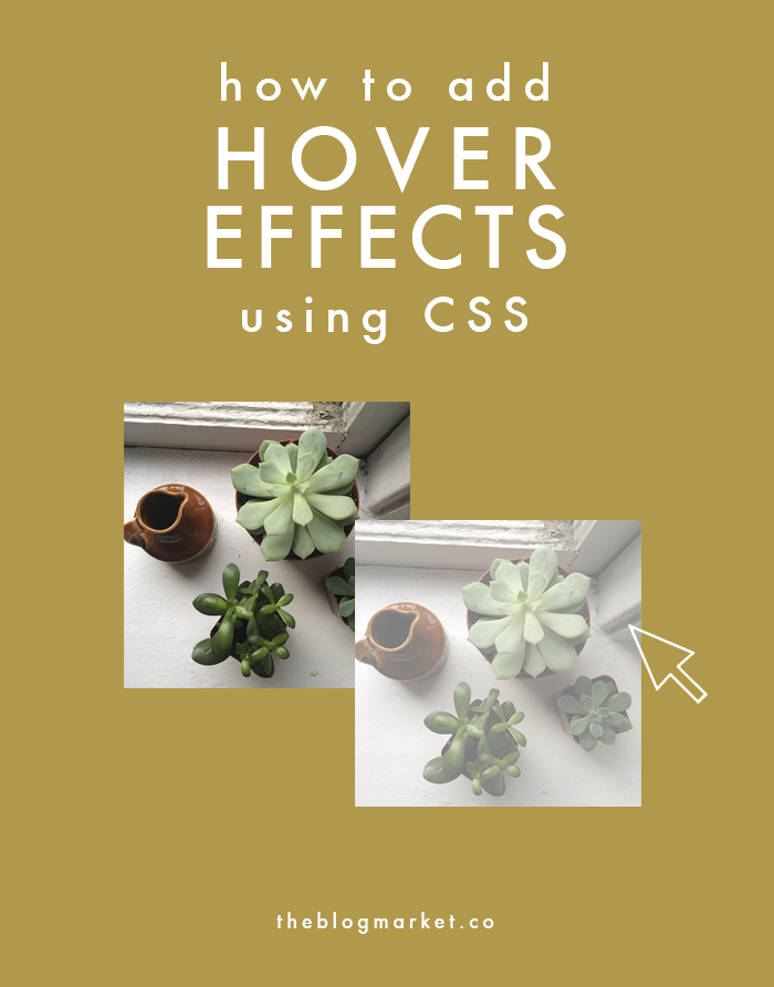 CSS Basics: Adding Hover Effects - The Blog Market